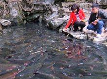 Suối Cá Thần Cầm Lương - Cẩm thủy Thanh Hóa